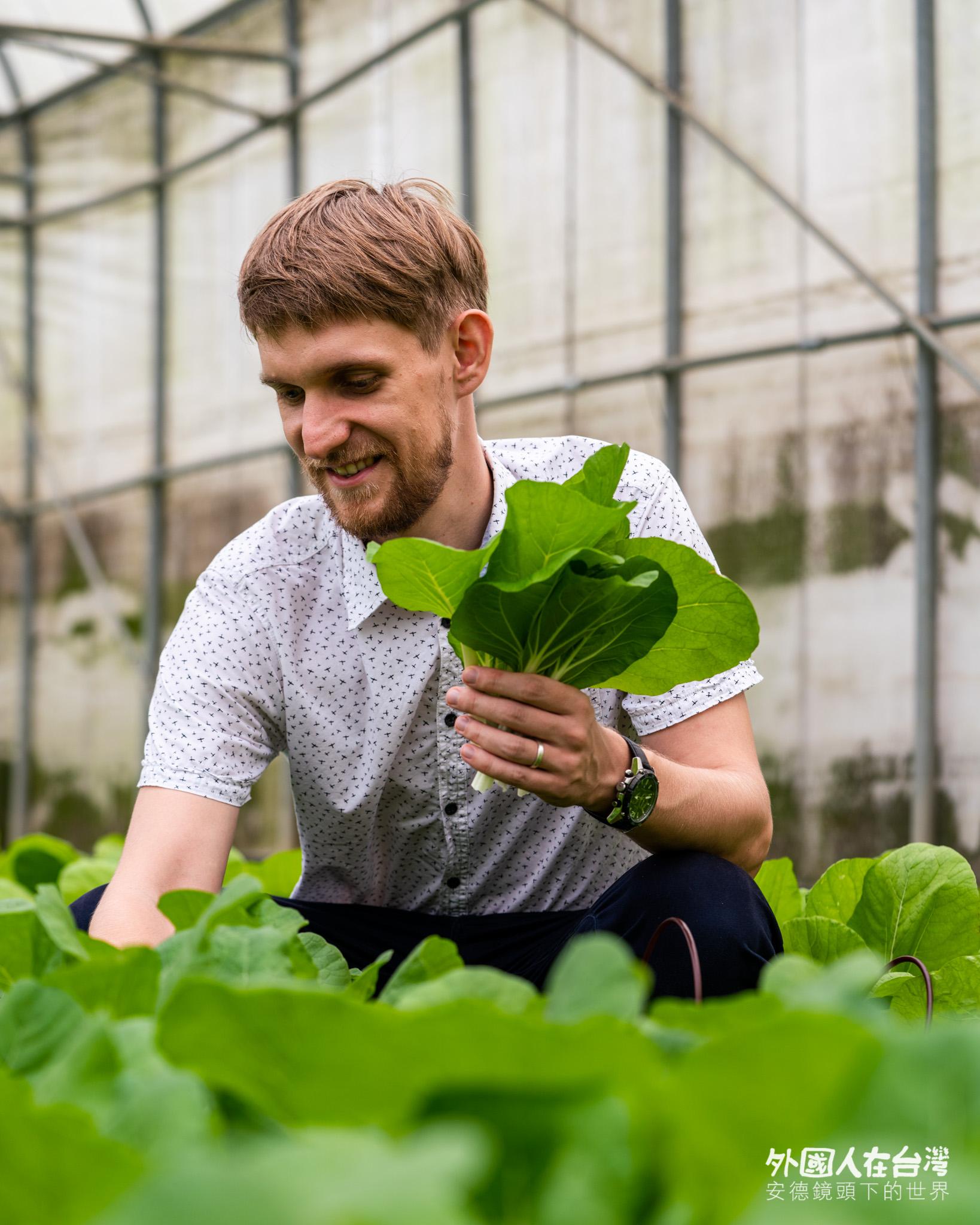 永齡農場有機蔬菜自己拔