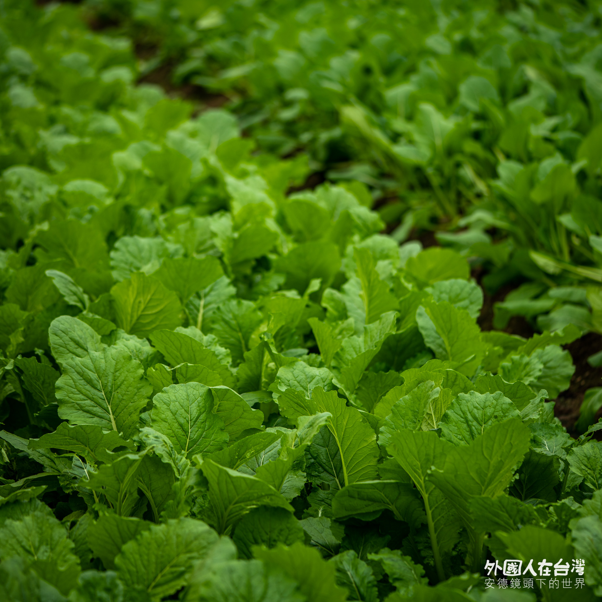 永齡農場有機蔬菜
